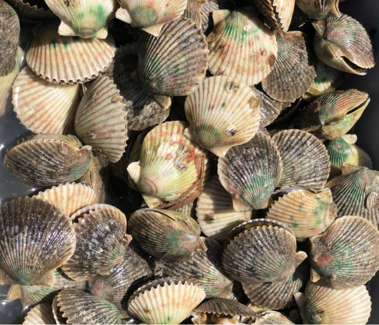 Scalloping In Citrus County