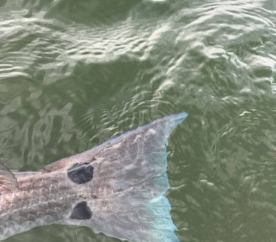 Reel Hook Fishing Charters and Manatee Expeditions (43)